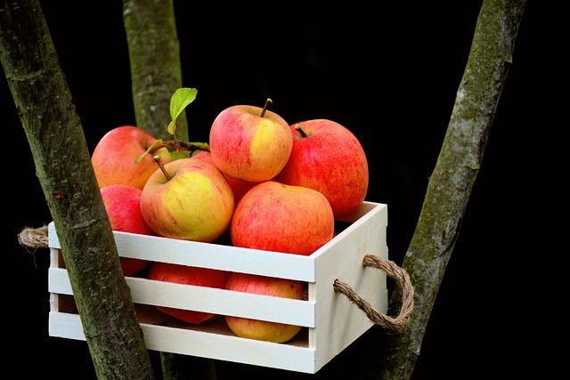 Sklizeň jablek na zahradě